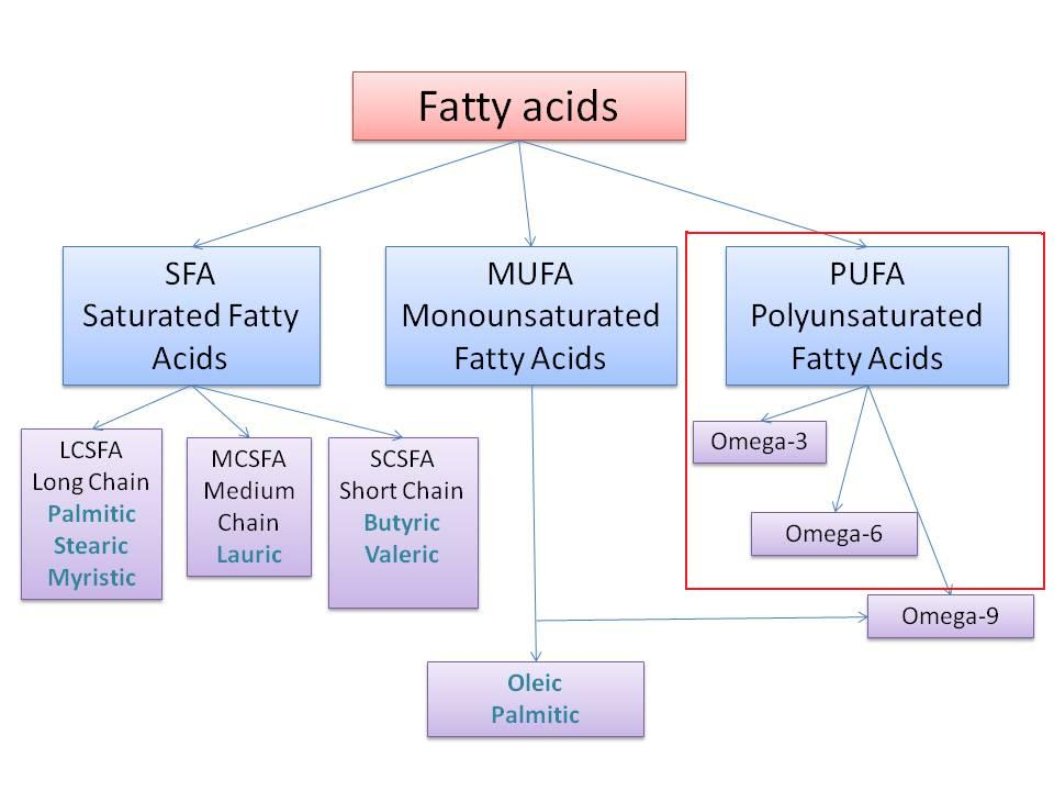 fatty-acids-final2