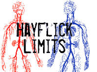 hayflick_ltd